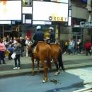 Конная полиция Нью-Йорка