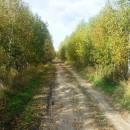 ''Сельская дорога. В осенних тонах''. Фото Осипова Олега