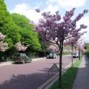 Лондон в цвету. Апрель 2011.