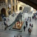 В музее естественной истории. Скелет диплодока