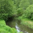 Живописные берега речки Шохонки. Фото Татьяны Шепелевой